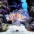 #ryba #przyroda #natura #sorux