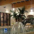www.sztucznepalmy.pl #SztucznaPalma #palmy #basen #aquapark