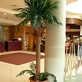 www.sztucznepalmy.pl #palma #palmy #sztuczne #drzewa #basen #aquapark