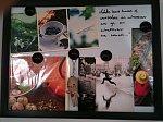 Fotosik darmowy hosting obrazków