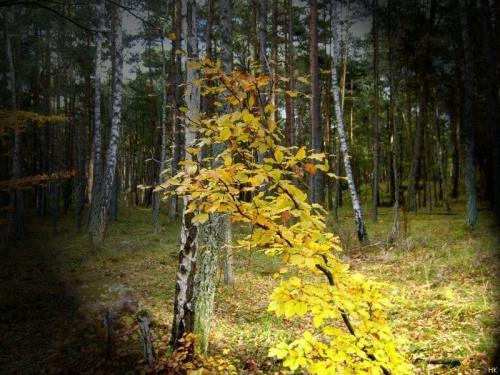 Jesiennie ale inaczej - jeszcze bardziej złocisto! #jesień #inaczej #przeróbki