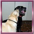 Namalowane-przyjaciółki czyli Ness i Xena #namalowane #inaczej #przeróbki #Xena #psy #przyjaźń #labradory