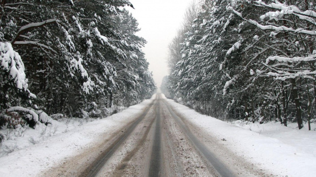 zima... w drodze do pracy #zima #snieg #drzewa #widok #plener