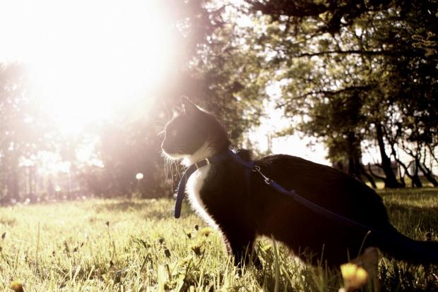 Fotek- fotograficzny kotek xD #Kotek #Fotek #kot #Salsa