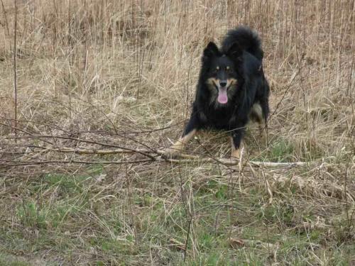 Jeszcze chwilę. Zaraz uporam się z tą gałęzią. #psy #zwierzęta